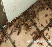 北京杀虫灭鼠服务价格 北京除蟑螂多少钱 灭吸血臭虫怎么收费